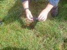 ecrevisse de louisiane en briere